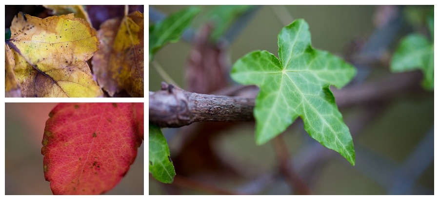 Feast your Eyes on Fall!!  And my Family!  : )
