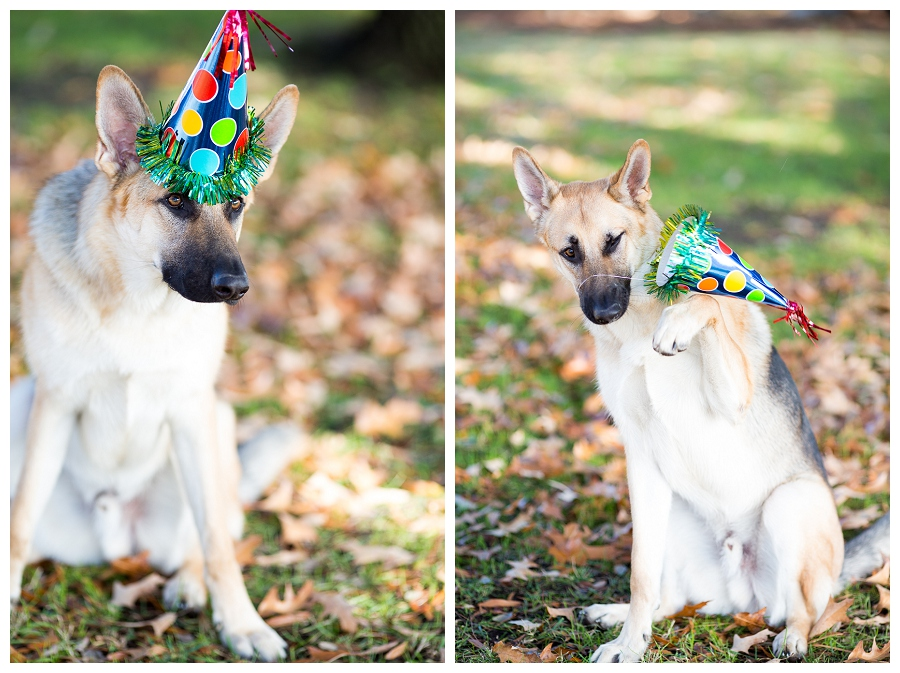 Norfolk Pet Photographer ~Happy 1st Birthday Bruce~