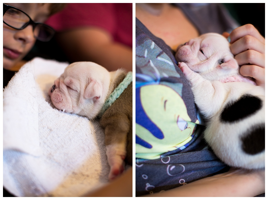 Puppies!!!  ~Pet Photographer Chesapeake Virginia~