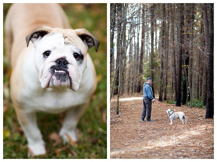 Norfolk Pet Photographer  Wilbur is 1!!!