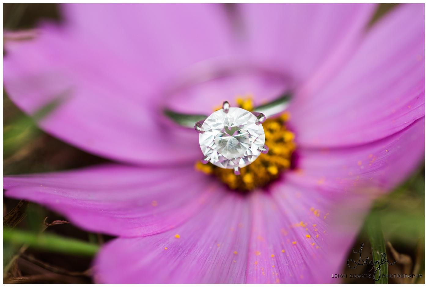 Alyson & Jared | Norfolk Botanical Garden Engagement