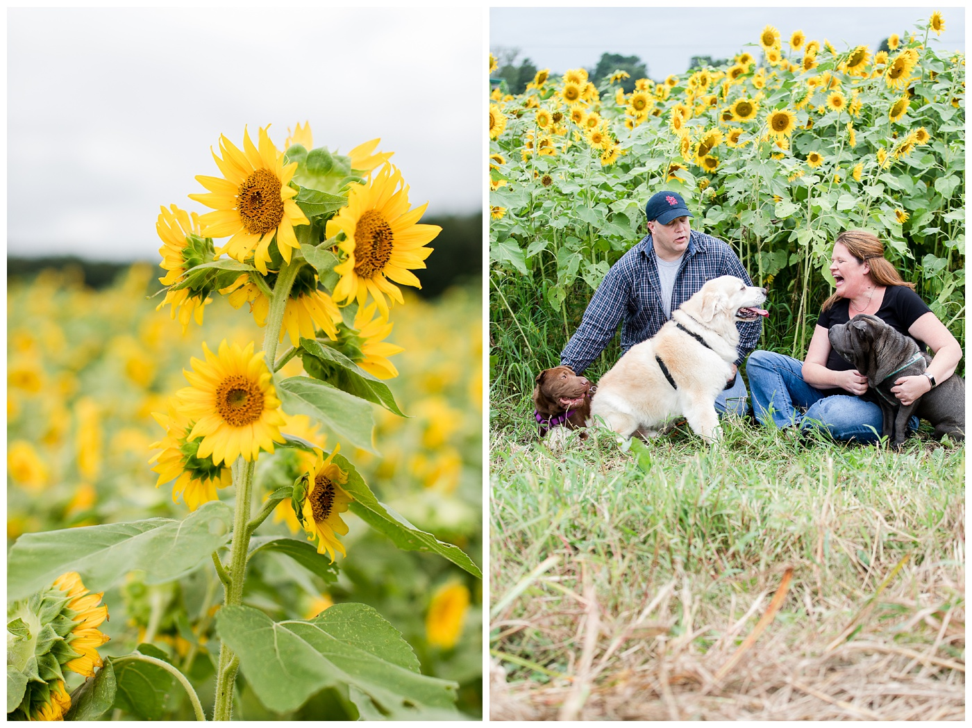 Haley & Pete | Cullipher Farms Sunflower field Maternity session